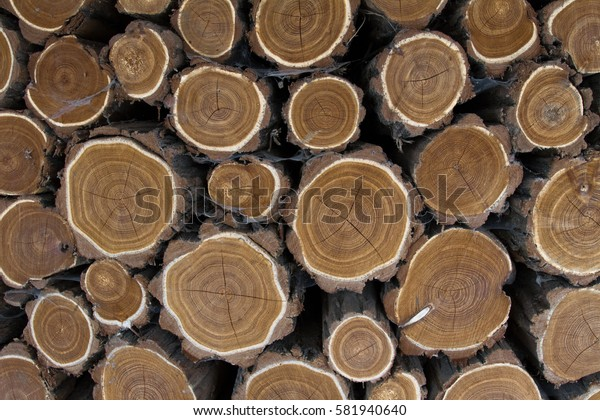Texture of logs.