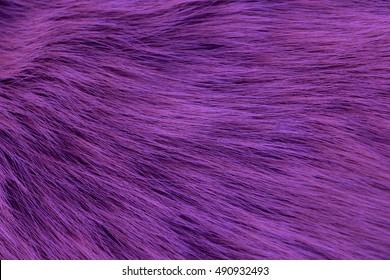 Texture long pile fur, fox purple painted. Textures, background