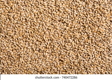 Texture of malt pilsner