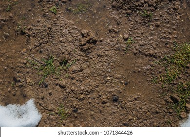 Texture of moist soil in early spring, puddles and mud, early grass from under snow, top view