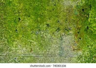 Texture of a mossy concrete wall with a bulging seam from a wooden formwork and a few small dark green lichens.