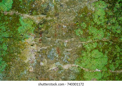 Texture of a mossy concrete wall with some light streaks and a lot of lichen on the sides.