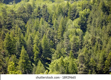 Texture of Mountain Trees
