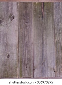 Texture. Natural, gray, old wood background