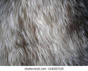 Texture of natural white fur