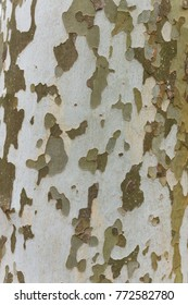 Texture nature camouflage background tree bark