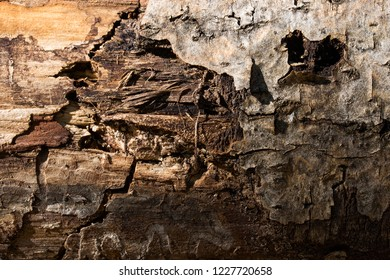 texture of old forest wood with peeled dark bark cracks and slivers natural background for design