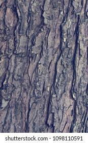 Texture of old maple tree bark vintage style