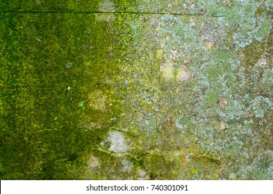 Texture of an old mossy concrete wall with a lot of lichen on the left and deep green right part.
