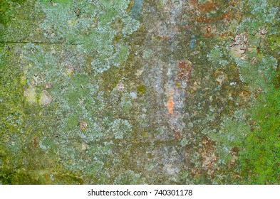 Texture of an old mossy concrete wall with a lot of lichen.