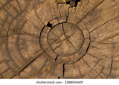 texture of an old stump. cross section of the tree
