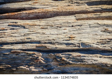 Texture of old timbers in tropical forests that weathered and decades eroded.