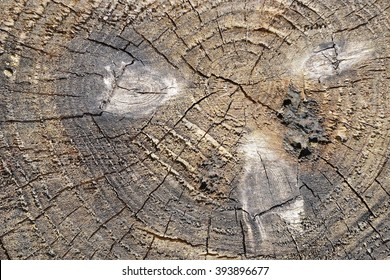 The texture of the old tree severed