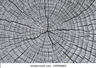 Texture of old wood with annual rings. Natural texture close-up