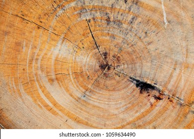 texture of old wooden tree trunk background.
