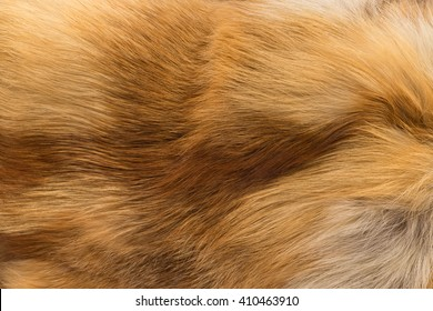 Texture orange fox fur, high pile. Background