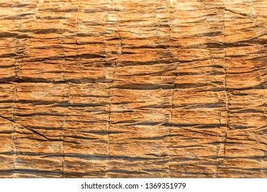 Texture of palm bark macro. Palm tree large trunk detailed structure background and texture of bark. Palm trunk and bark close-up. Rough brown palm tree wood bark natural texture background for design