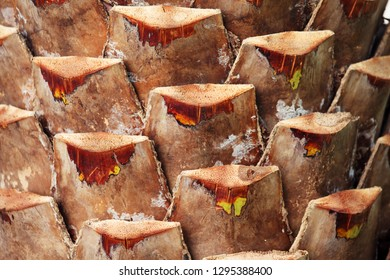 texture of palm tree trunk background.