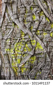 Texture and pattern on the tree bark