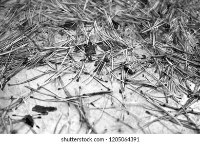 texture, pine needles on a shiny surface - Shutterstock ID 1205064391