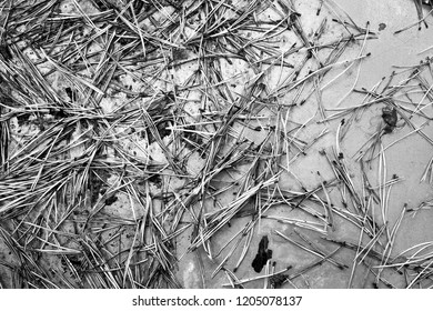 texture, pine needles on a shiny surface - Shutterstock ID 1205078137