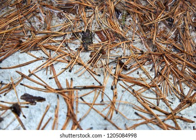 texture, pine needles on a shiny surface - Shutterstock ID 1205084998
