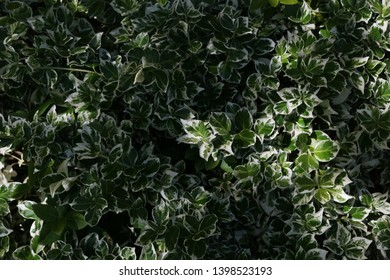 Texture of plant leaves. Natural texture. leaves background. Organic.