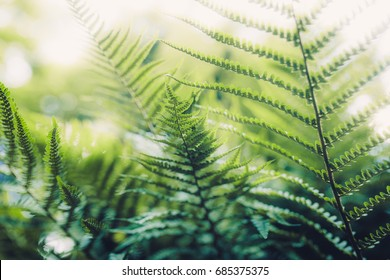 Texture of plants in summer