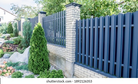 Texture of profiled metal. Metal fence. urban landscaping, beautiful thuja occidentalis on the background of a modern fence made of metal profile.