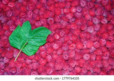 The texture of the raspberry fruit up close