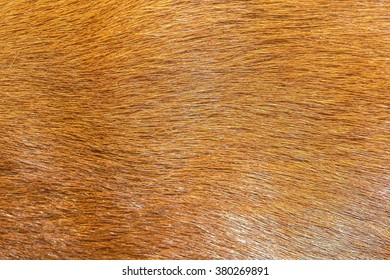 Texture real red hair animal