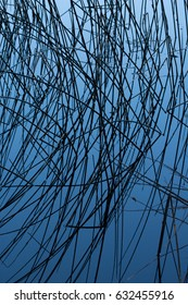 Texture of reeds on blue background / Linear dark pattern on water