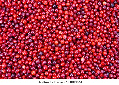The texture of ripe red berries lingonberry