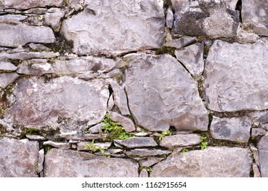 Texture of rock wall with little green leaves.