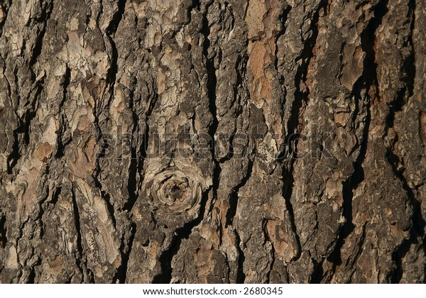 texture series: close up view of wood bark