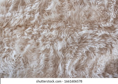 The texture of sheep's white color wool.High Resolution Background