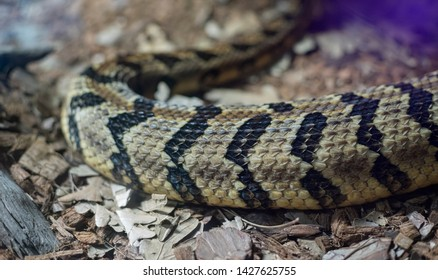 texture of the skin of a snake, detailed scales of the skin of a reptile