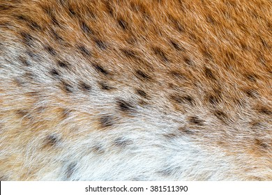 Texture spotted wild animal fur . Wild forest lynx