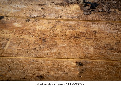 Texture of spruce wood destroyed by spruce bark beetle