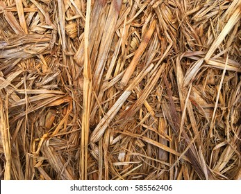Texture of straw