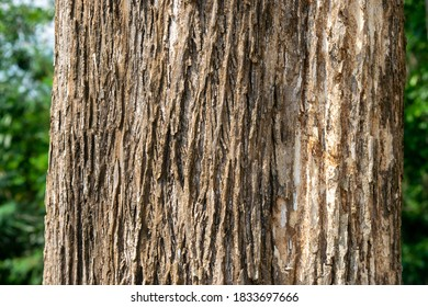 texture of the teak tree is around 50 years old