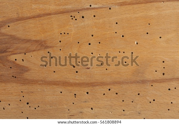 Texture Termite Damaged Wood Termite Holes Stock Photo Edit Now 561808894