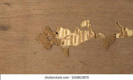 Texture Termites Eat Wood.
