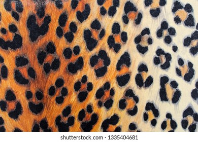The texture of the tiger
