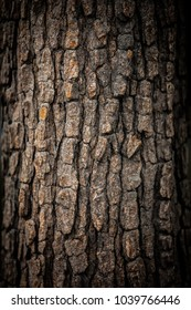 Texture of the tree