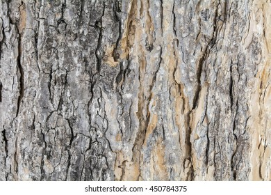 texture of the tree bark