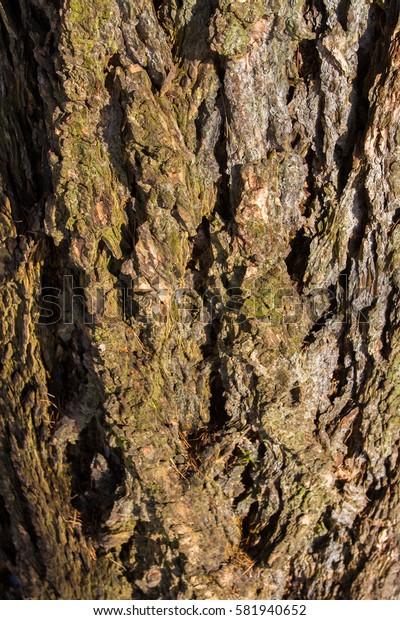 Texture of tree bark.