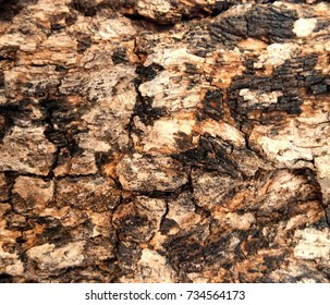 Texture of tree bark brown bumps and cracks in sunlight