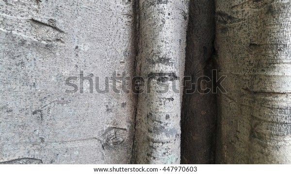 Texture of tree bark  natural background
