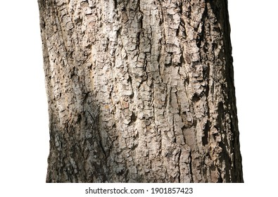 Texture of tree bark on white background